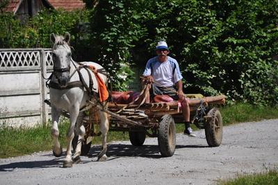 Projects Abroad vrijwilligers in Roemenië komen nog regelmatig paard en wagens tegen