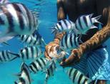 Vissen worden gevoed tijdens een snorkel uitstapje bij het haaienproject in Fiji
