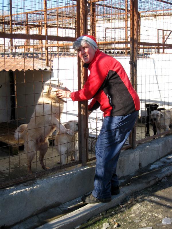 Projects Abroad vrijwilliger bij het dierenverzorging project in Roemenië