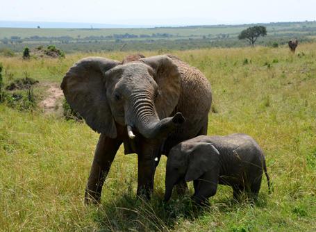 Combineer vrijwilligerswerk in Tanzania met een safari en spot olifanten in het wild