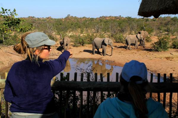 Franse vrijwilliger helpt met het identificeren van olifanten bij het Wild at Tuli reservaat in Botswana