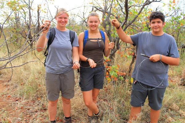 Vrijwilligers op het natuurbehoud project verwijderen strikken die door stropers geplaatst zijn bij het Wild at Tuli reservaat in Botswana