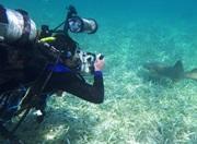 Dykker fotograferer en hai