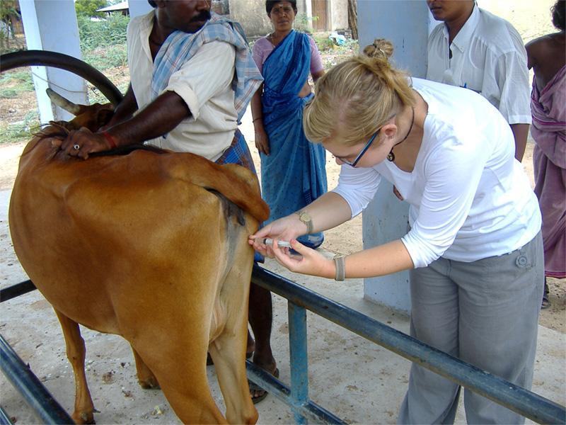 Veterinary intern giving a shot