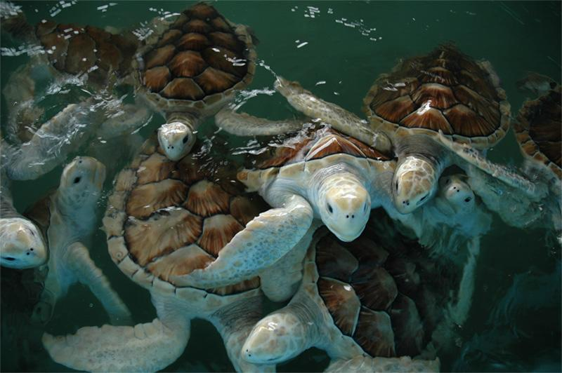 Injured turtles at the conservation site