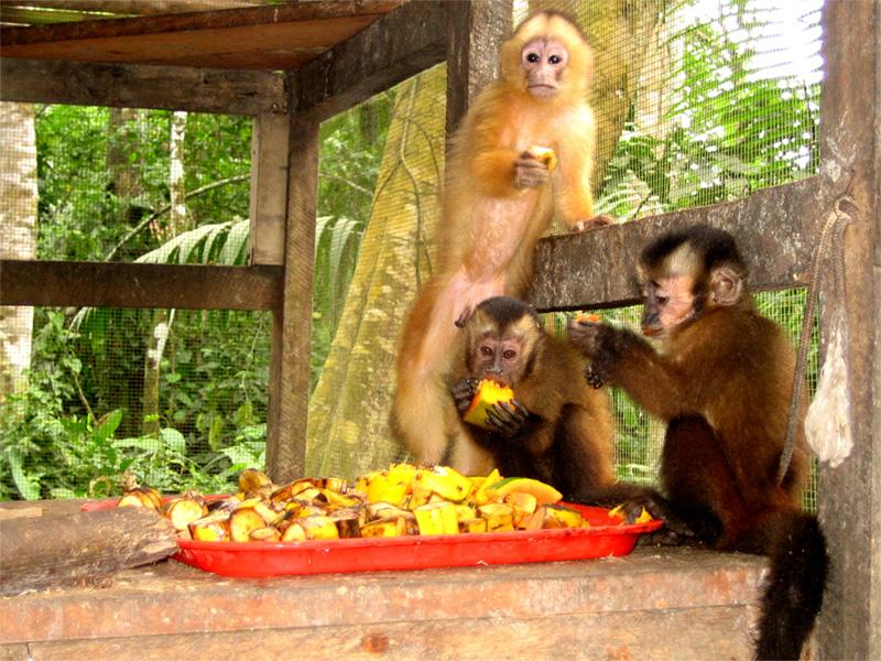 Monkeys at the conservation site