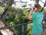 Bird watching from the canopy