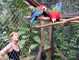 Observing parrots at Taricaya