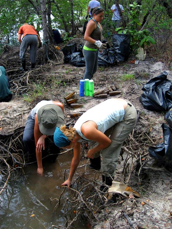 Clearing mangroves