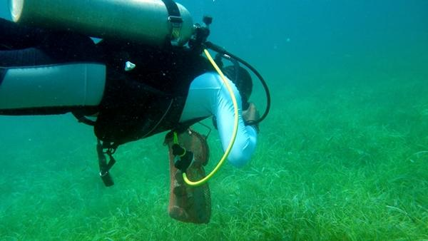 A volunteer diver helps clear the reef of rubbish while on a dive in Belize.