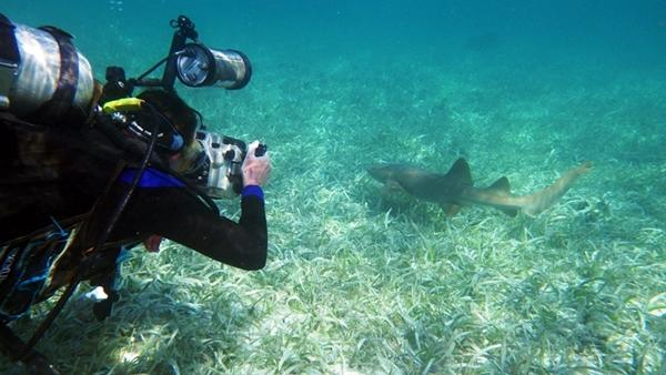A young diver photographs a shark underwater in Belize.
