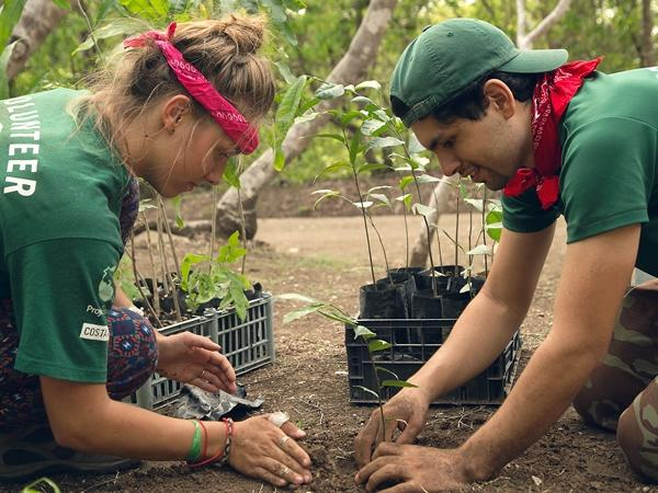 Conservation volunteer and staff plant trees in Barra Honda National Park