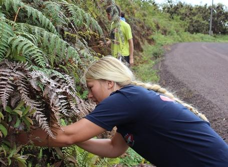 A volunteers helps remove invasive plant life in Ecuador