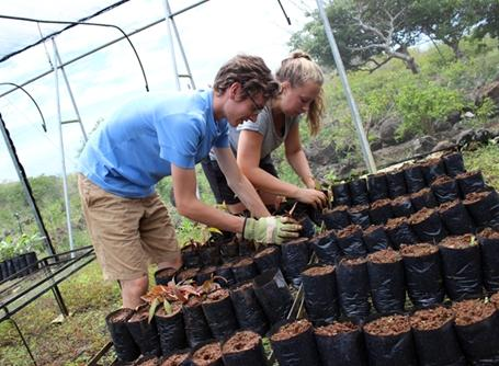 Volunteers work at Highlands nursery