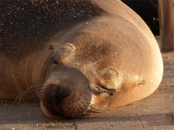 Sea Lion on San Cristobal