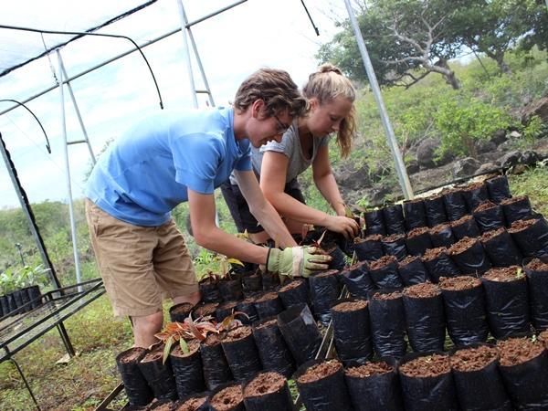 Volunteers work at Highlands nursery