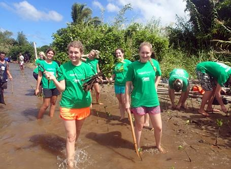 Projects Abroad volunteers help plant mangroves as part of our reforestation efforts in Fiji