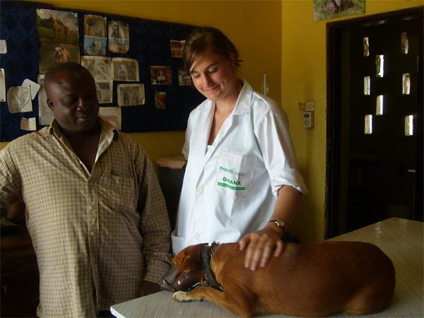 Veterinary Medicine Volunteer