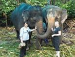 Volunteers with elephants