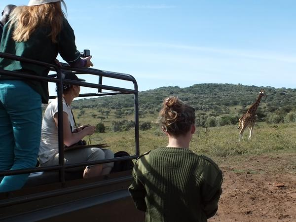 A group of Conservation volunteers observe a wild giraffe in Kenya