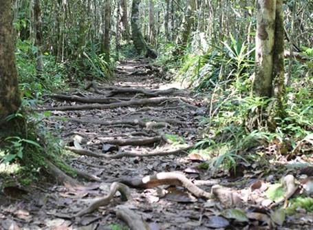 A path through a rainforest in Madagascar, Africa.