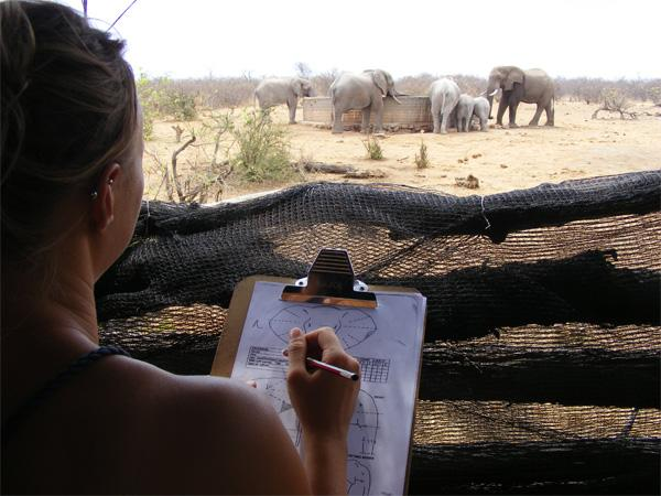 Collecting data on elephants