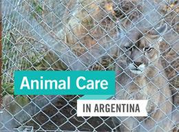 Animal Care in Argentina