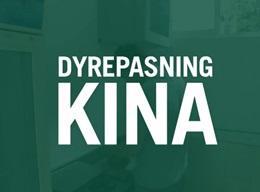 Dyrepasning - Pandaprojekt