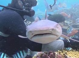 フィジーサメ生態保護紹介
