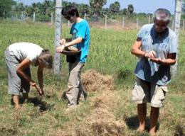 Agricoltura biologica in India