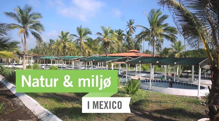Frivilligt arbejde med Natur & Miljø i Mexico | Projects Abroad
