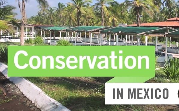 Conservation in Mexico