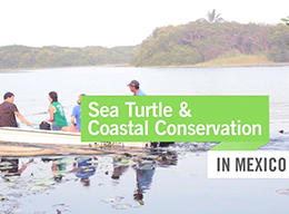 Sea Turtle & Coastal Conservation in Mexico
