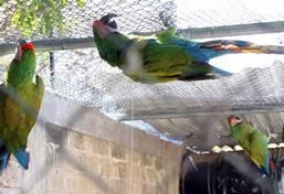 Médecine vétérinaire & soins animaliers au Mexique