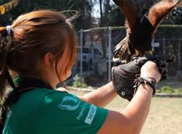 A Volunteer on the Animal Care Project in Mexico