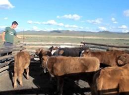 Vita con i Nomadi in Mongolia
