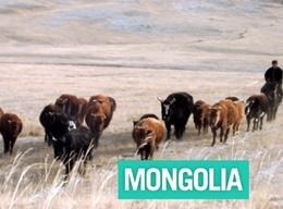 Mongolia: Overview