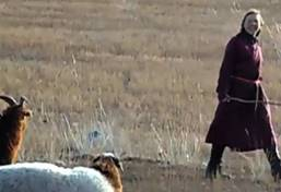 Volontariat en Mongolie