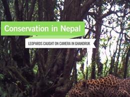 Conservation in Nepal