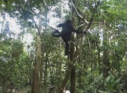 Regnskogbevaring i Peru