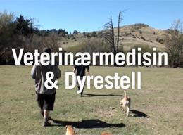 Veterinærmedisin & Dyrestell