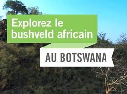 Explorez et protégez le bushveld africain au Botswana