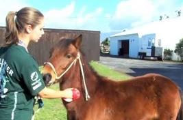 Médecine vétérinaire et soins animaliers en Afrique du Sud