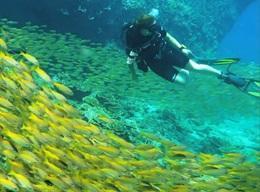 Dykking & Marinbevaring i Thailand