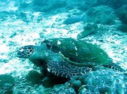 Naturschutz in Thailand