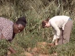 Wolontariat rolniczy w Togo