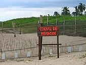 Mexiko, Freiwillig, Naturschutz, Corral