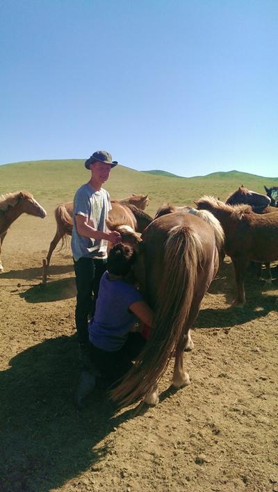 Pferde im Nomaden-Projekt in der Mongolei