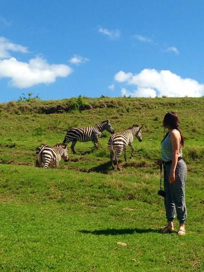 Freiwillige mit Zebras in einem Nationalpark in Tansania