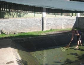 mexiko-naturschutz-krokodilfarm
